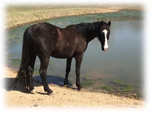 Shadow at pond