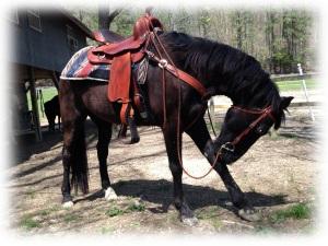 Shadow Dad's saddle