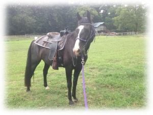 Shadow saddle